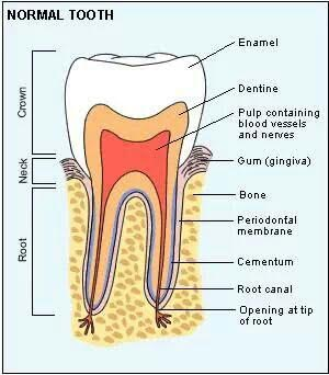 Root canal treatment kolkata